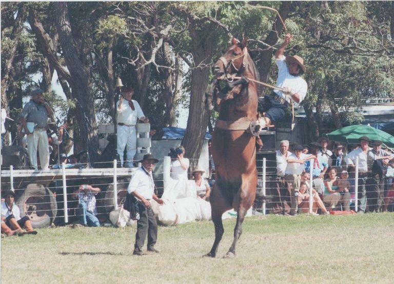 Otros tiempos. En Argentina, Massola en un campo de jineteada