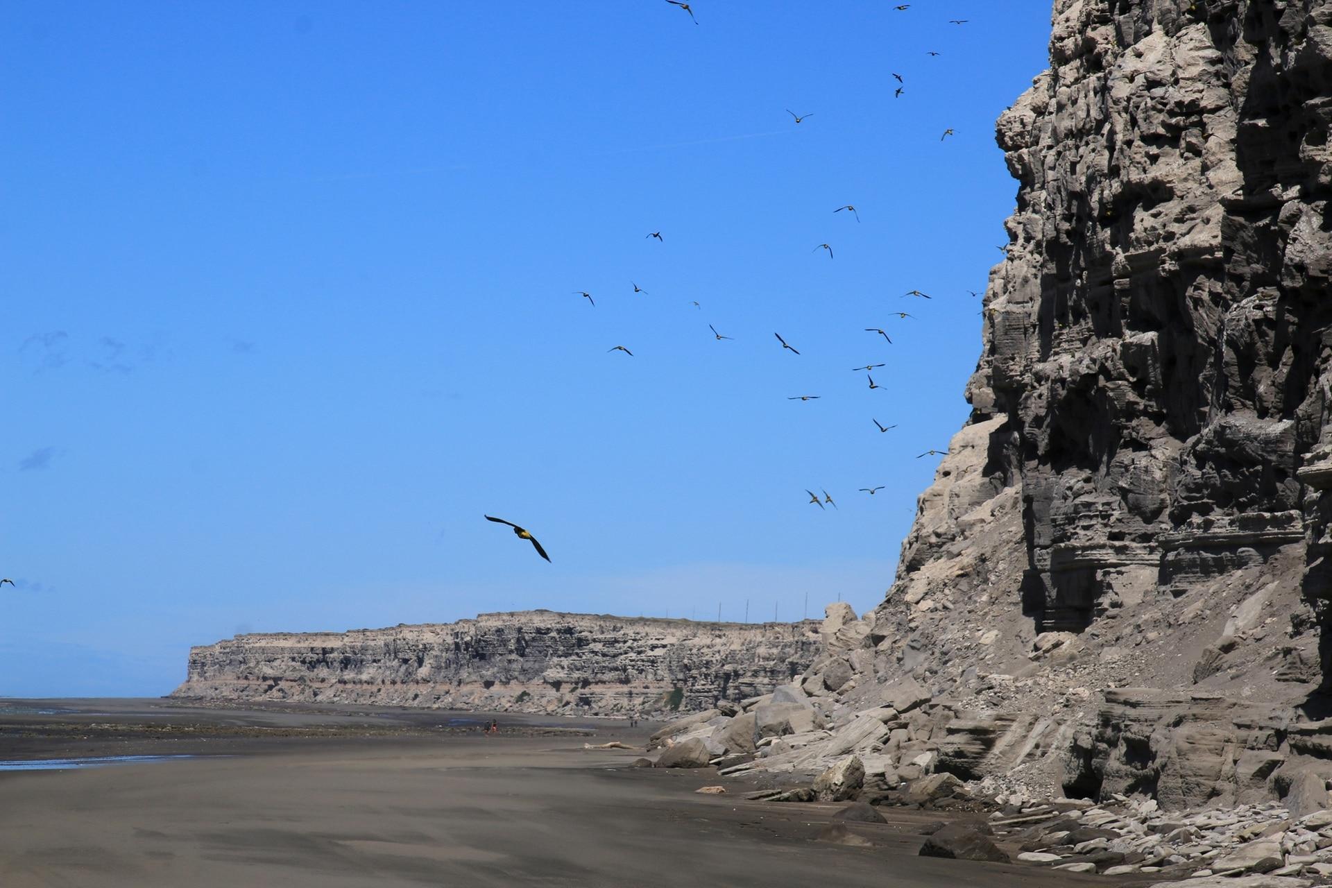 El Condor, la playa rionegrina donde habita una gran colonia de lobos barranqueros. En los últimos tiempos muchos murieron por falta de comida