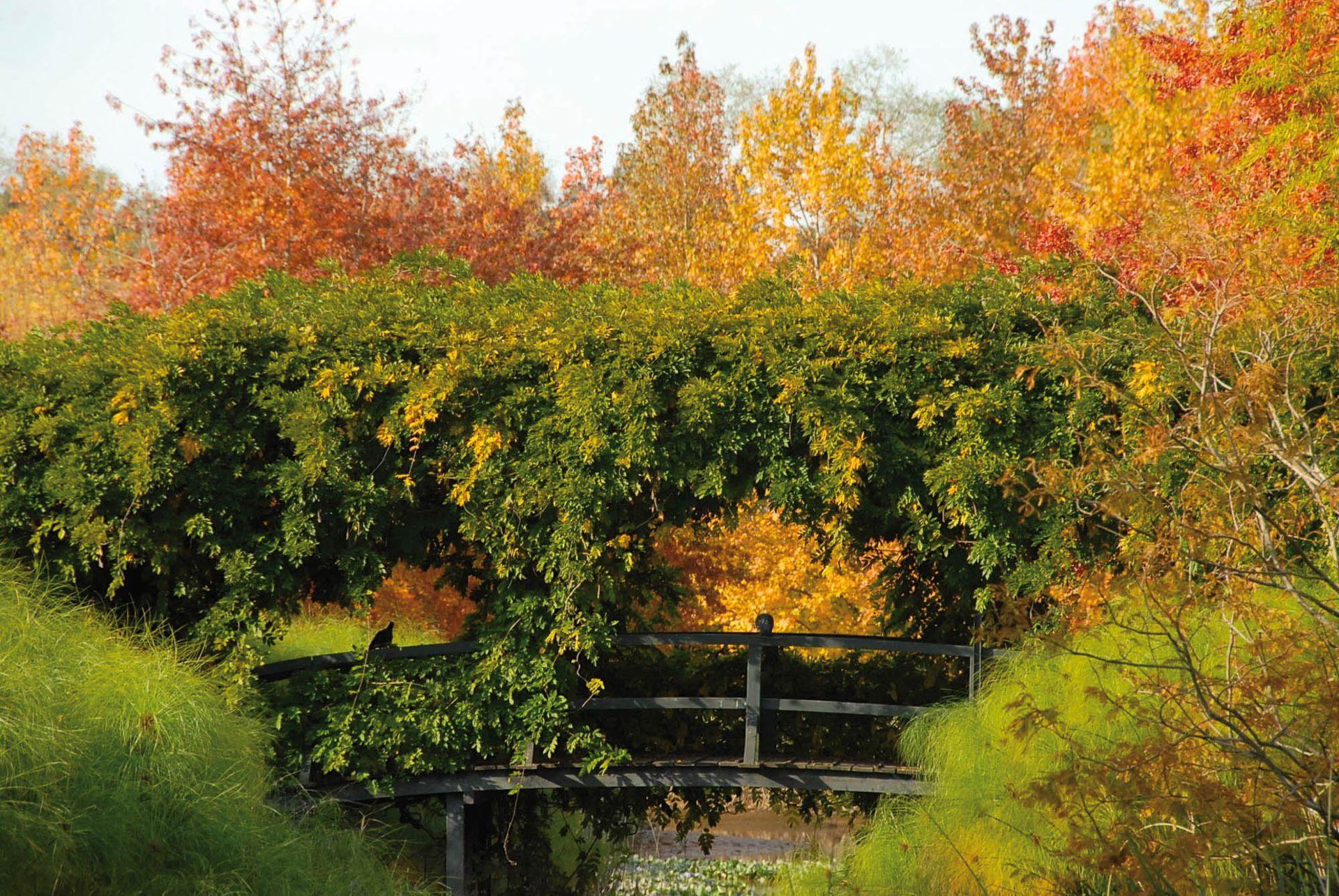 El diseño del parque de El Descanso, en el Delta de Tigre, se inspiró en los jardines privados de Monet, con puentes y senderos que generan múltiples recorridos.