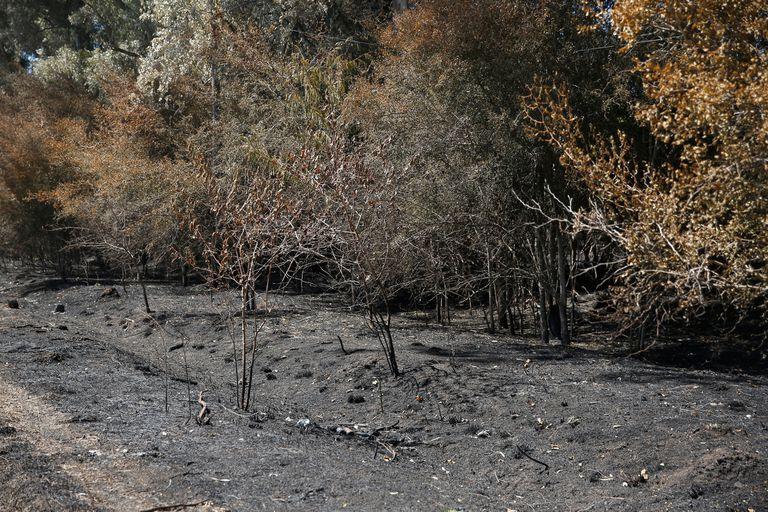 Los vecinos sospechan que hay incendios intencionales