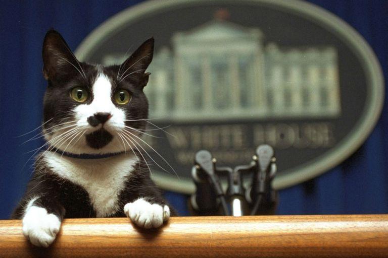 Socks era toda una personalidad en la Casa Blanca. Fuente: Internet.