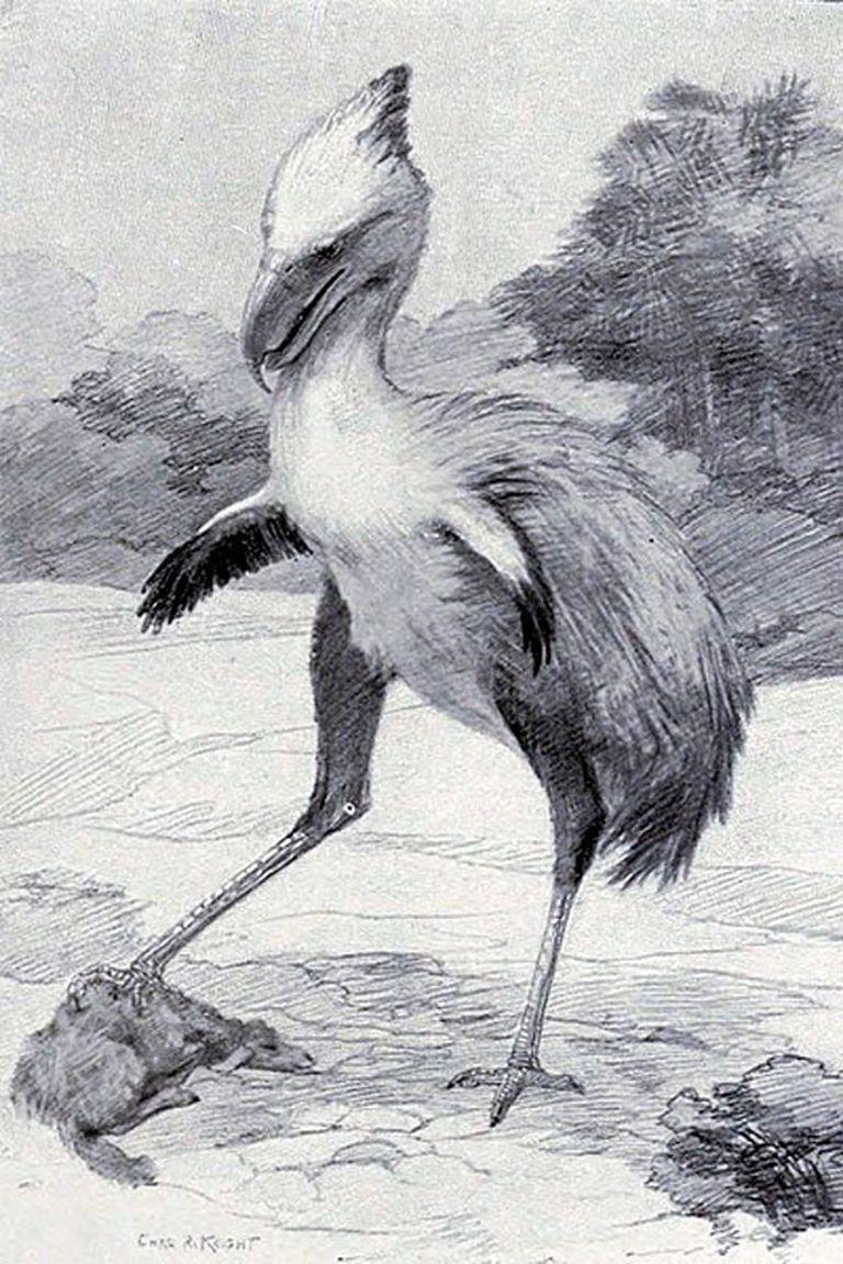 """Temible Phorusrhacos longissimus (1887), depredador patagónico """"terrorista"""" prehistórico descripto por Ameghino"""