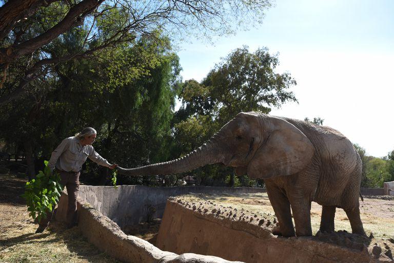 El ex zoo mendocino busca trasladar a Tamy a un santuario de Brasil, donde podrá vivir en las condiciones adecuadas, luego de años de cautiverio.