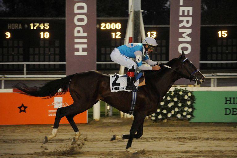 El caballo que perdió un ojo a poco de nacer gana corriendo con el corazón