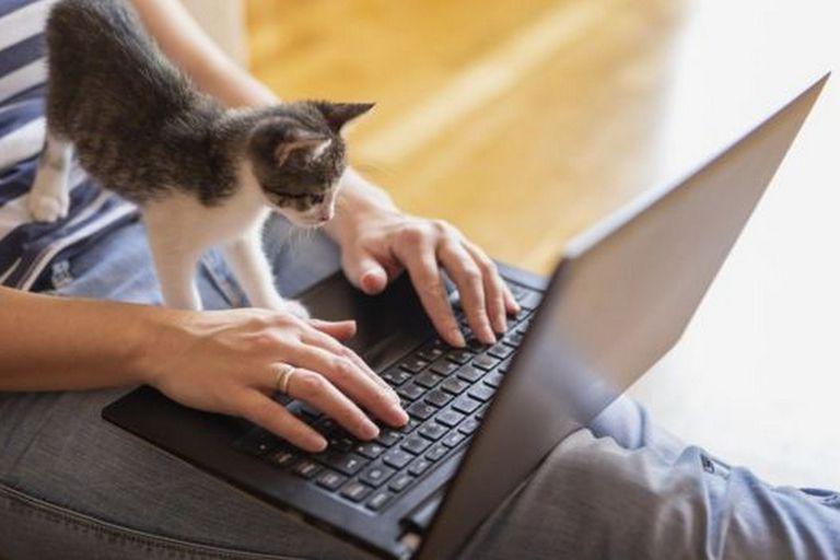 Las mascotas, los picoteos y hasta las labores del hogar pueden distraerte cuando trabajas desde casa