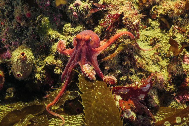 Más de 700 especies marinas sufrieron contaminación por microplásticos