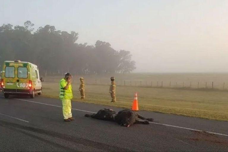 El animal murió al ser embestido por la camioneta - Fuente: Twitter