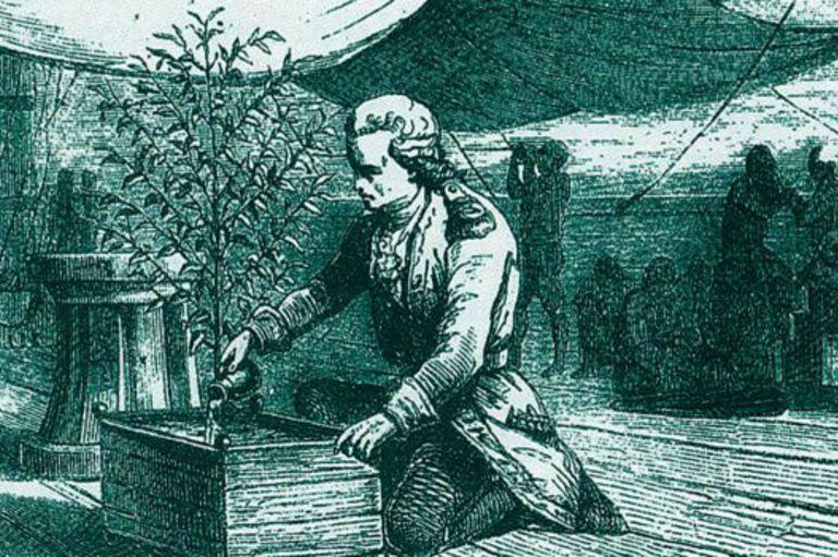 Gabriel-Mathieu Francois Dceus de Clieu transportó una planta de café (o tal vez varias) de los invernaderos del Jardin royal des plantes en París a Martinica en 1720