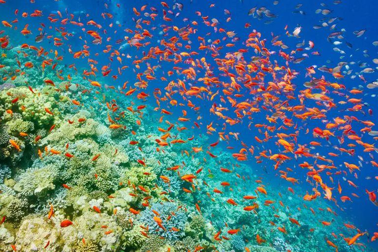 El océano absorbió más del 90% del calor generado por la emisión de gases, y esto tiene consecuencias en los ambientes marinos