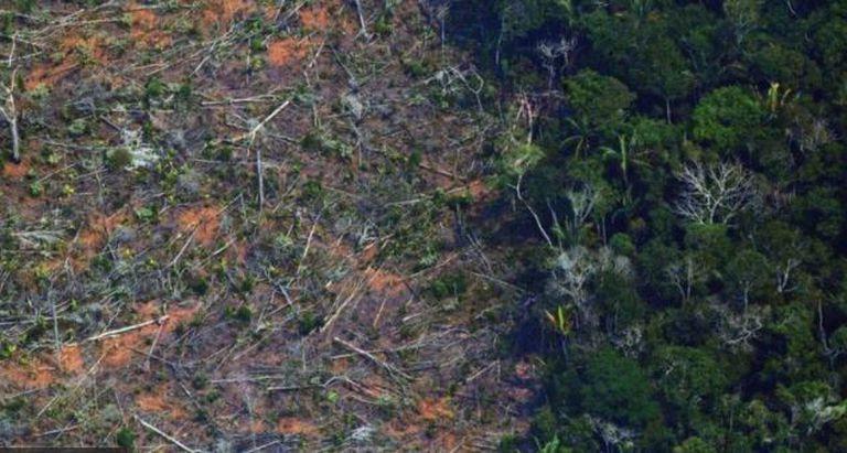 La tala de árboles es una de las mayores amenazas