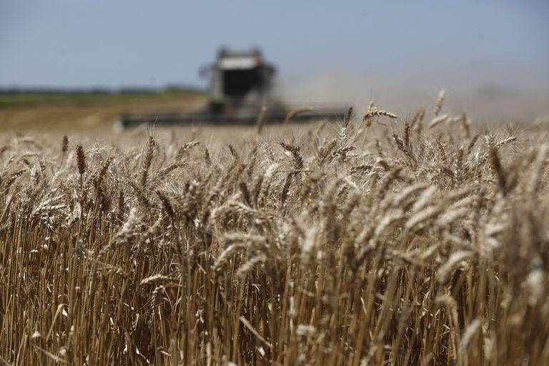 Mercado de granos: el trigo, en el ojo de la tormenta