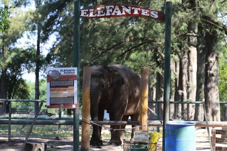 Murió Sharima, la elefanta del zoo de Luján