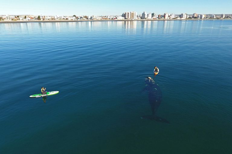 La historia detrás del increíble video donde una ballena juega con una mujer cerca de la costa