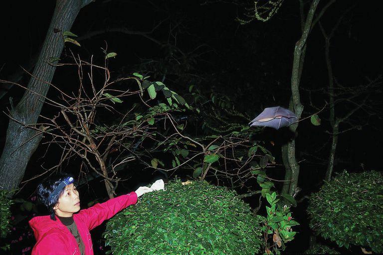 Shi Zhengli, en 2004; comenzó a trabajar con murciélagos más de 12 años antes de la pandemia que paralizaría al mundo