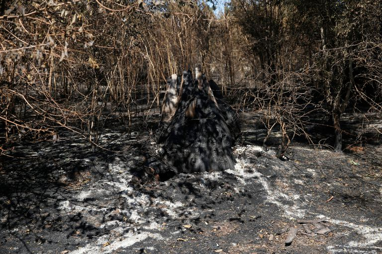 Varios campos se prendieron fuego el mismo día que ellos fueron a protestar por los aumentos