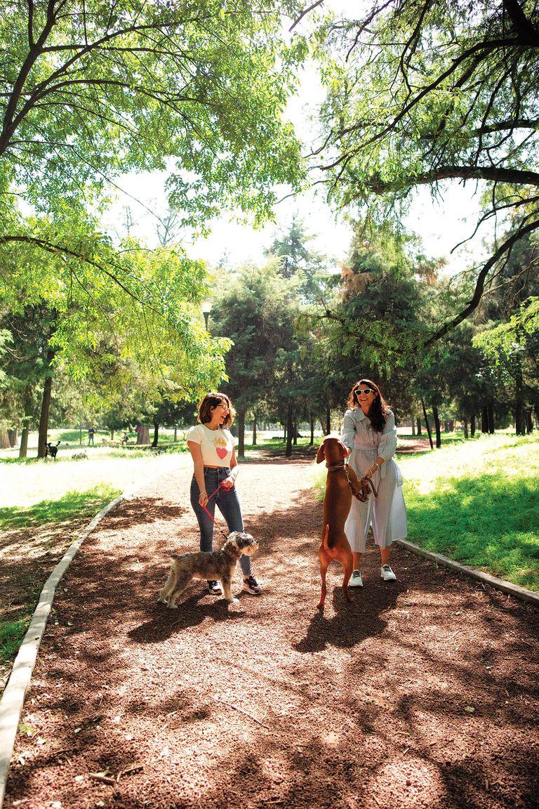 En Chapultepec es habitual ver paseaperros y gente haciendo actividad física y armando pícnics.