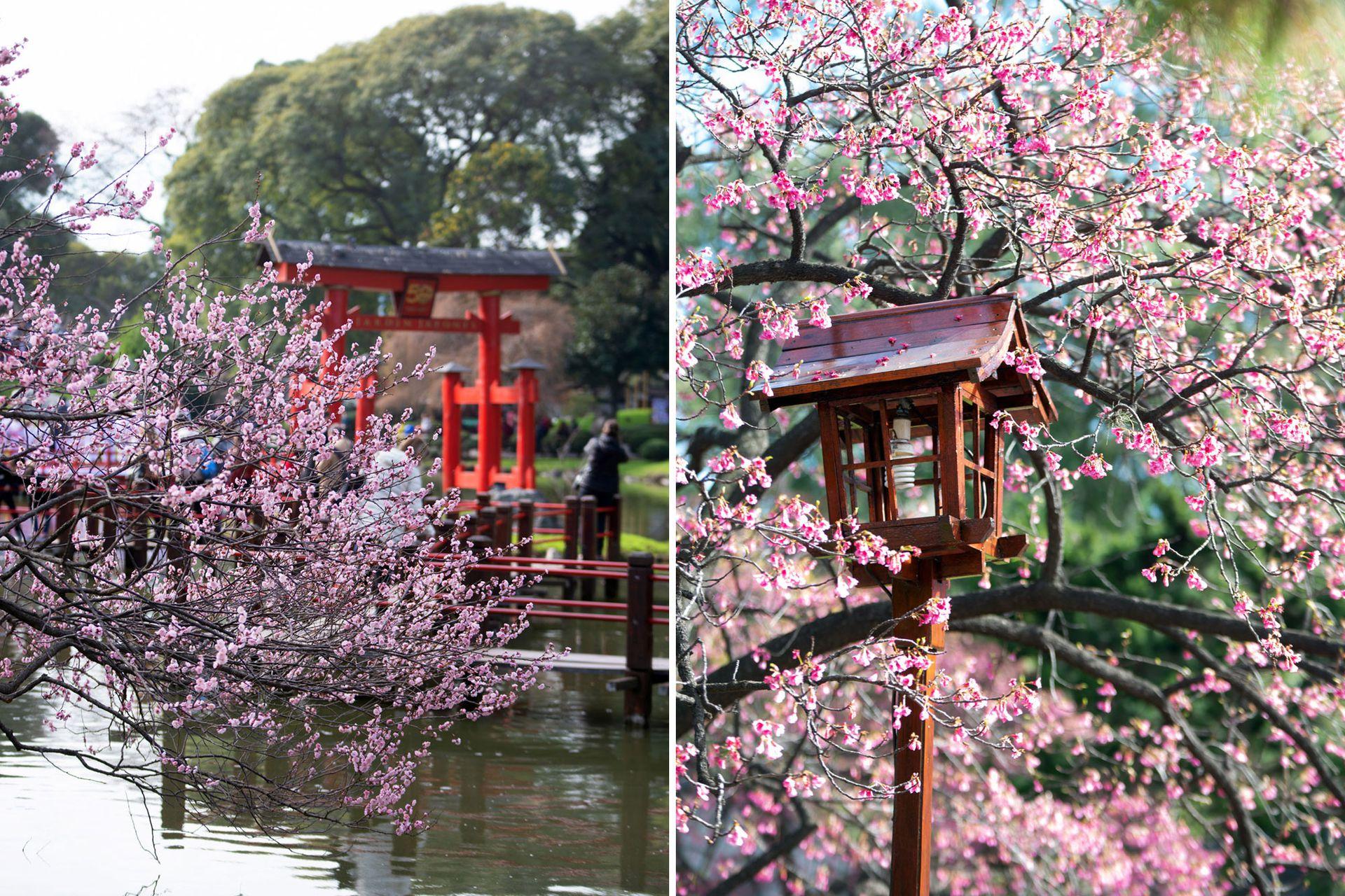"""La flor del cerezo tiene para los japoneses un significado importante asociado con el código samurai. De hecho, el emblema de estos guerreros era la flor del cerezo. La aspiración de un samurai era morir en su momento de máximo esplendor, en la batalla, y no envejecer y """"marchitarse"""", como tampoco se marchita la flor del cerezo, la cual cae del árbol antes de marchitarse, empujada por el viento."""