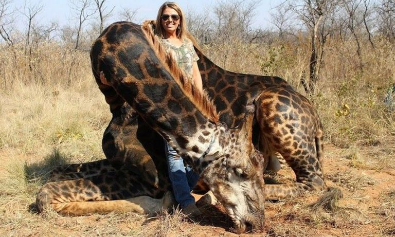 Cazó a una jirafa negra, se sacó una foto y las redes estallaron de bronca