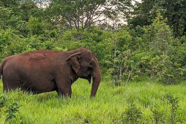 Mara en el Santuario de Elefantes Brasil