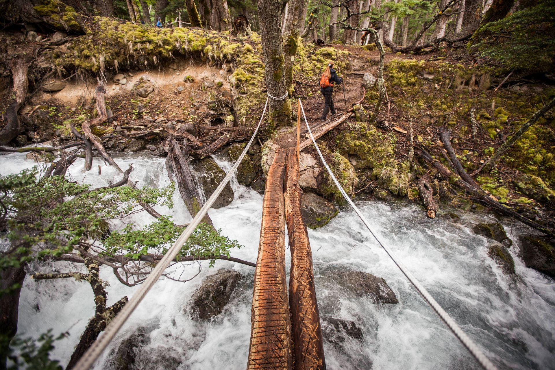 """Pato García guía la caminata a través de un bosque de lengas centenarias hacia el glaciar Vespignani, """"vecino"""" del lodge."""