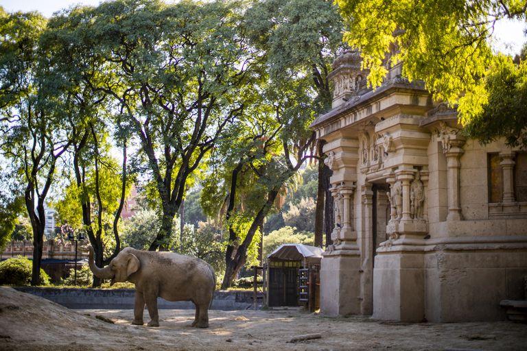 Mara, en libertad. A un año de su viaje a Brasil, cómo vive hoy la elefanta