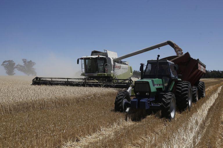 Precios en baja para el trigo por la cosecha y los rumores de intervención