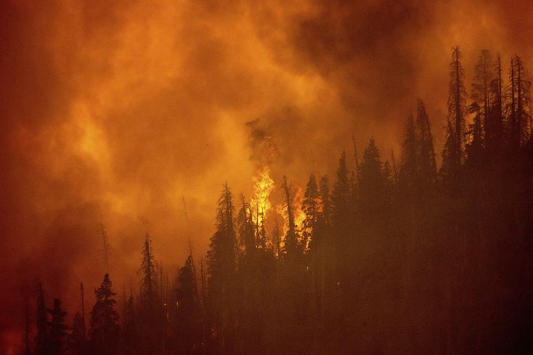 Los incendios destruyen un bosque de secuoyas de más de 80 metros en California