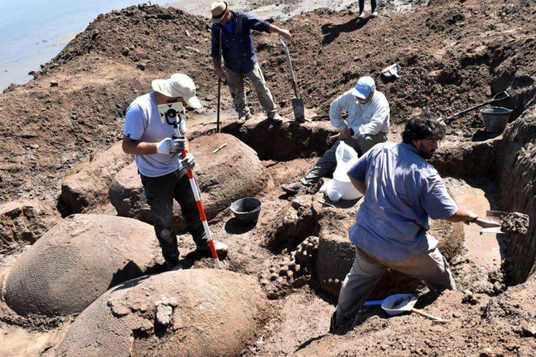 Científicos del INCUAPA extraen los restos de los gliptodontes encontrados en el partido de Bolívar.