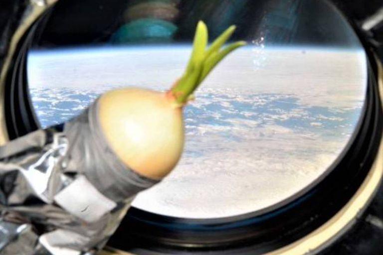 La Estación Espacial Internacional cumplió 20 años de servicio y para conmemorar este aniversario, la NASA publicó fotos de las comidas de los astronautas a lo largo de la historia espacial