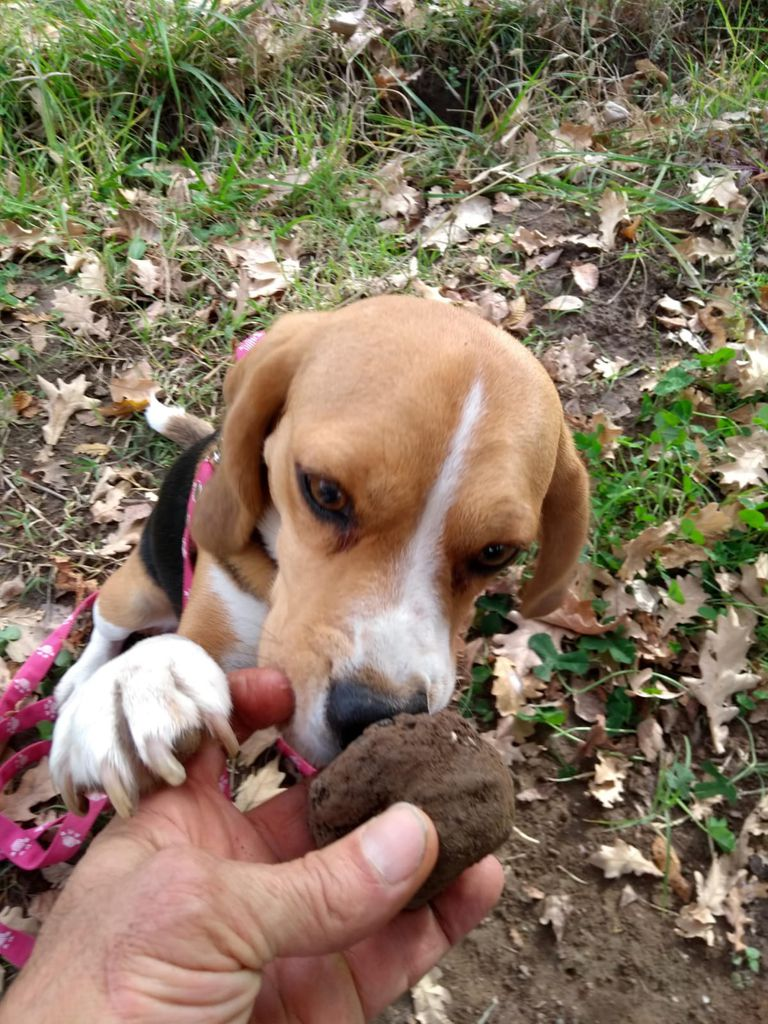Uno de los perros con la trufa