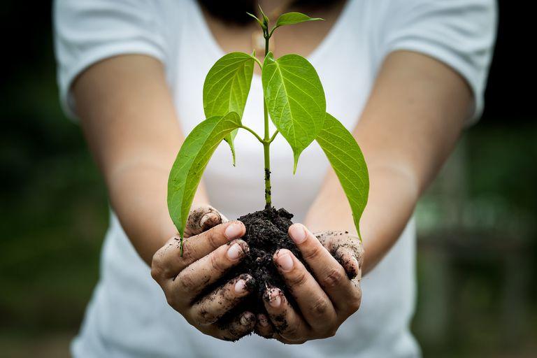 ¿Cómo reducir tu huella de carbono?