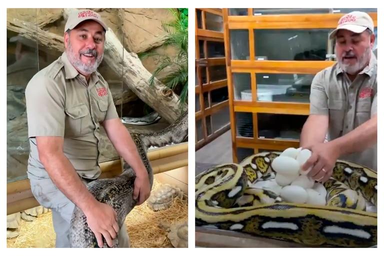 Todo ocurrió mientras Jay Brewer manipulaba los huevos del reptil