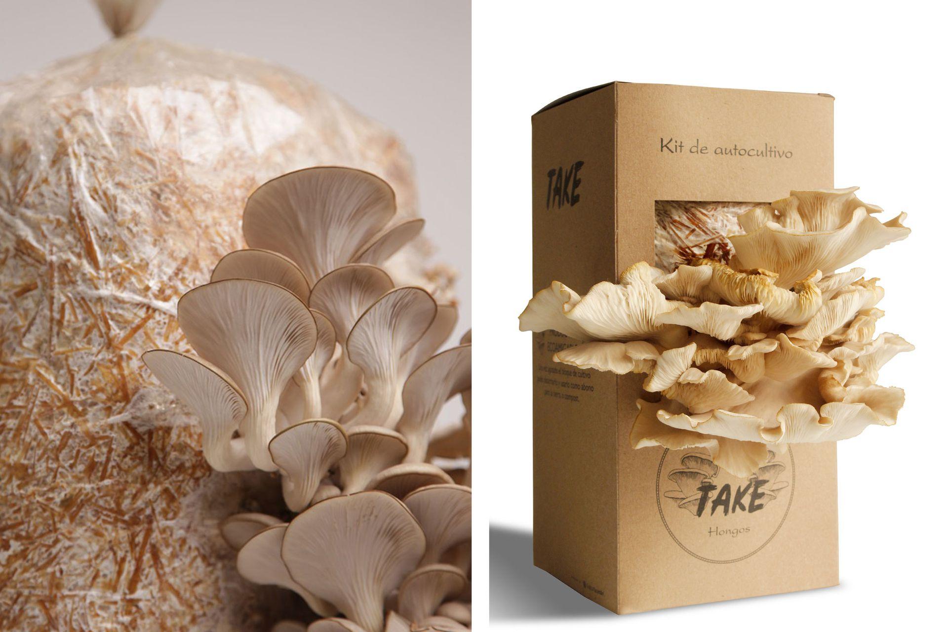 Los kits de autocultivo suelen ofrecer la bolsa o caja con el sustrato, el micelio inoculado y un pulverizador.