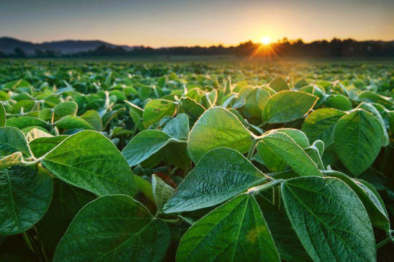 La multinacional que deja de vender semillas de soja en la Argentina, pero sigue en la región