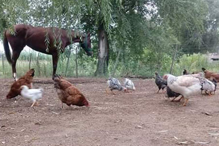En Ballesteros, Dormía Sola convive con otros animales en el fondo de una casa.