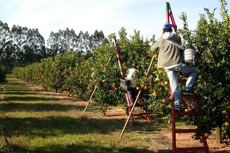 Una empresa familiar lleva medio siglo exportando cítricos, peras y manzanas