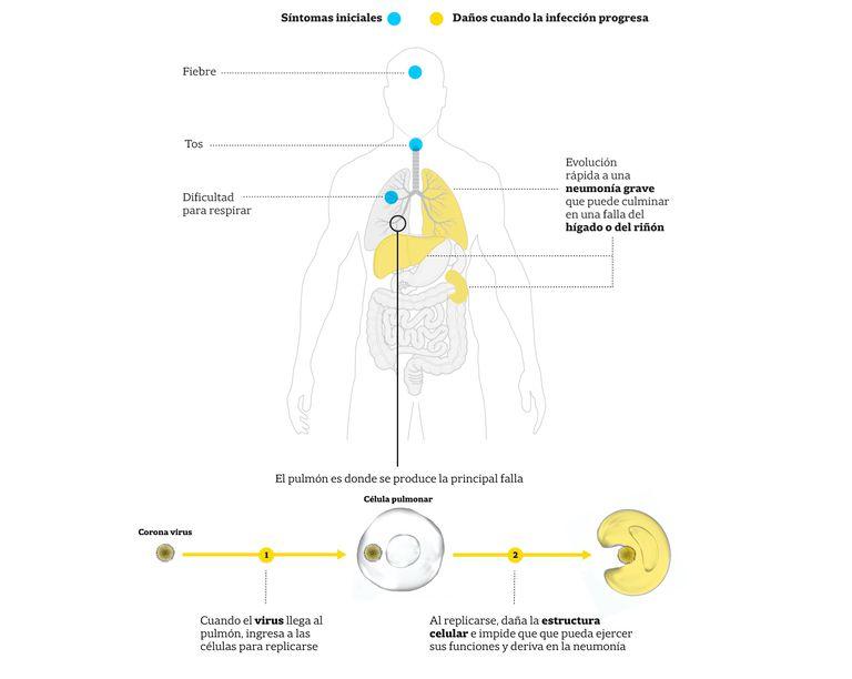 Los síntomas del coronavirus