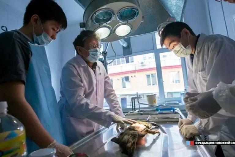 Los científicos se asombraron al hallar dentro del estómago del cánido un trozo de tejido tan bien conservado de quien fuera su última presa
