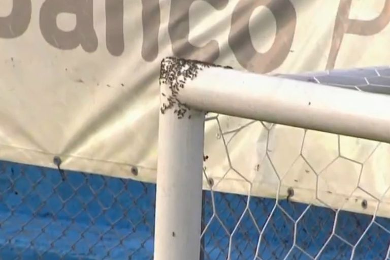 Ascenso: el partido que estuvo suspendido por un panal de abejas en el arco