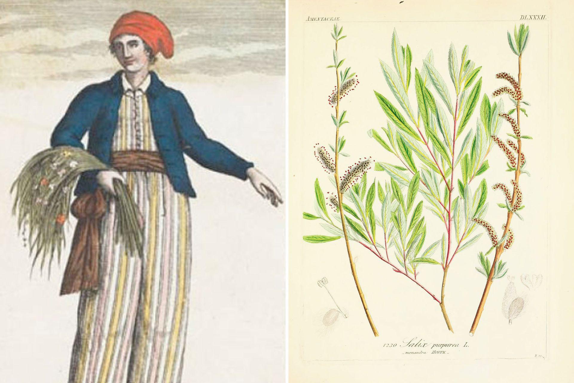 Izquierda: la francesa Jeanne Baret (1740-1804), botánica destacada y primera mujer en dar la vuelta al mundo. Derecha: En un momento se adoptó colocar al final del género y la especie la inicial del botánico que estudió la planta por primera vez.