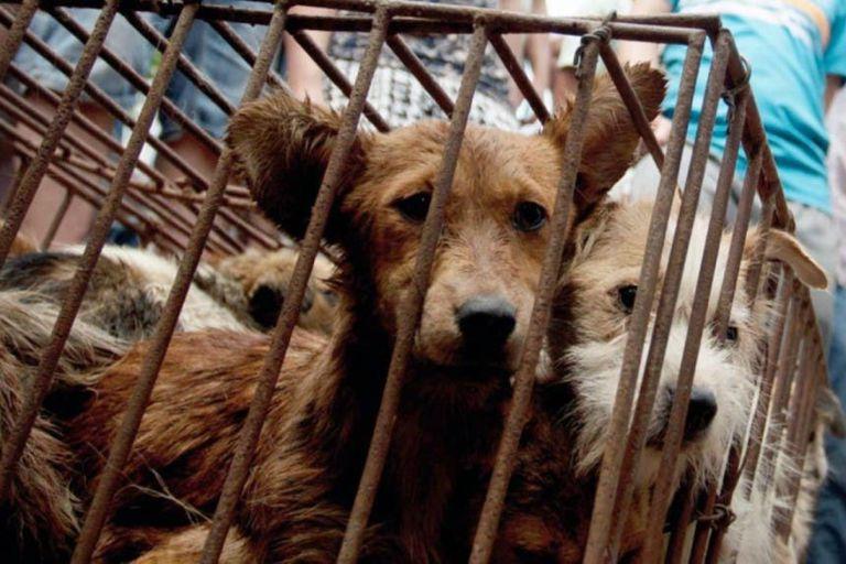 En China, el Ministerio de Agricultura determinó que los perros no serán más considerados ganado