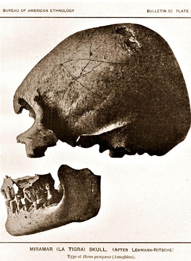 """El cráneo que halló Florentino Ameghino en el arroyo La Tigra a finales del siglo XIX, que le sirvió para elaborar la teoría del """"hombre fósil"""" sudamericano"""