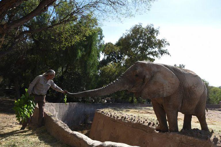 Un cuidador con otra elefanta del Ecoparque de Mendoza, Kenya