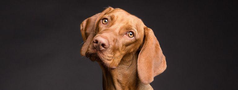 Telepatía con animales, la nueva terapia para mascotas
