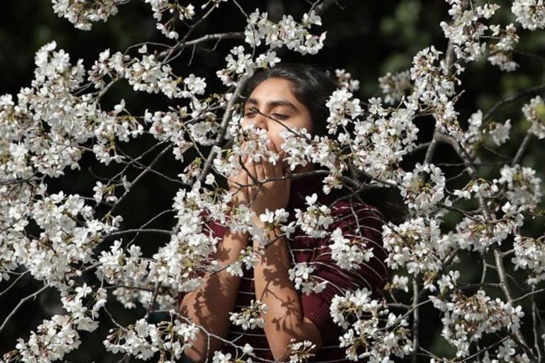 Hay más de 200.000 especies de plantas con flores