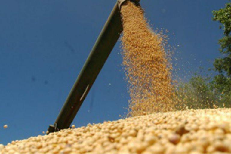 Por orden judicial se realizaron 20 allanamientos en el marco del desfalco de la corredora de cereales rosarina