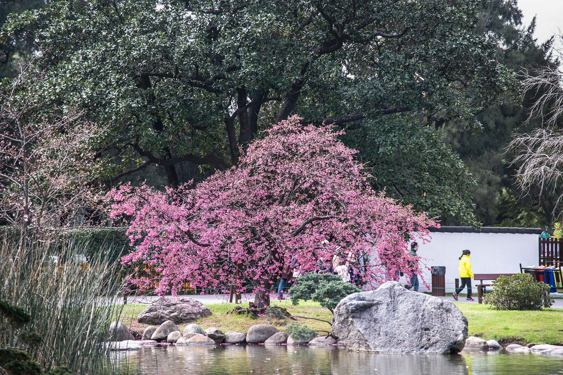 El Jardín Japonés se encuentra abierto todos los días de 10 a 18:45 y cumple con protocolos de seguridad e higiene. Hay cuatro turnos de visita y la entrada se adquiere en la boletería del Jardín el mismo día de la visita o a través de www.shop.jardinjapones.org.ar. La entrada general cuesta $290. Los menores de 12 años y mayores de 65 años ingresan sin cargo, presentando el DNI en la boletería.