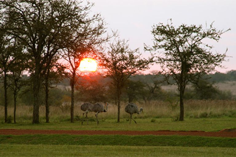 De acuerdo con la nota del medio español, los Esteros del Iberá es uno de los mejores lugares del mundo para avistar fauna salvaje. Hasta los compara con el Serenguiti, una zona de África reconocida por la cantidad de especias para admirar.