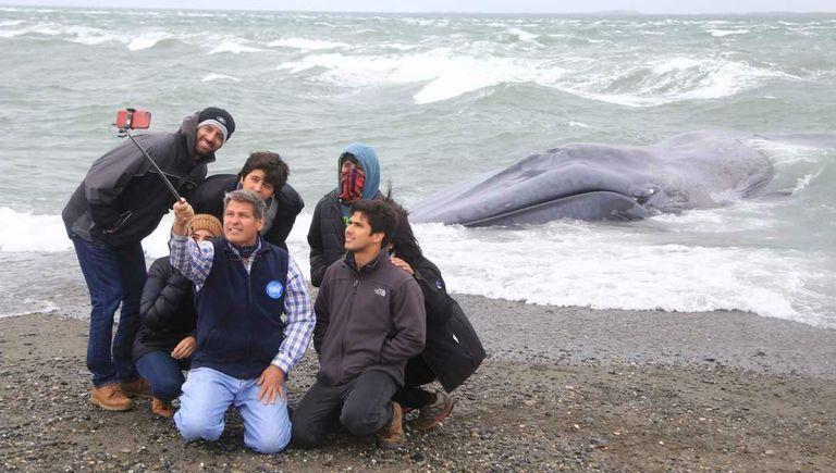 Un grupo de personas se toma selfies con el cuerpo de la ballena
