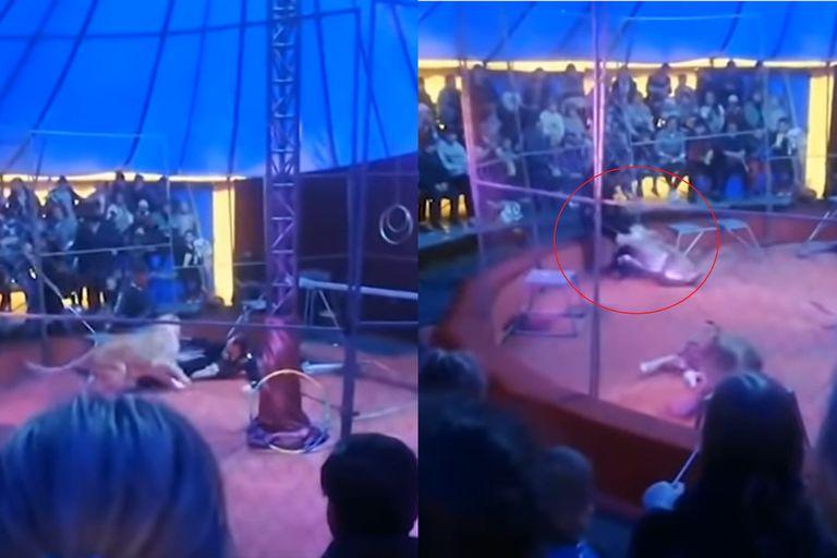 Terror en el circo: un león atacó a su entrenador frente a los espectadores